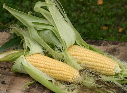 Продажа кукурузы